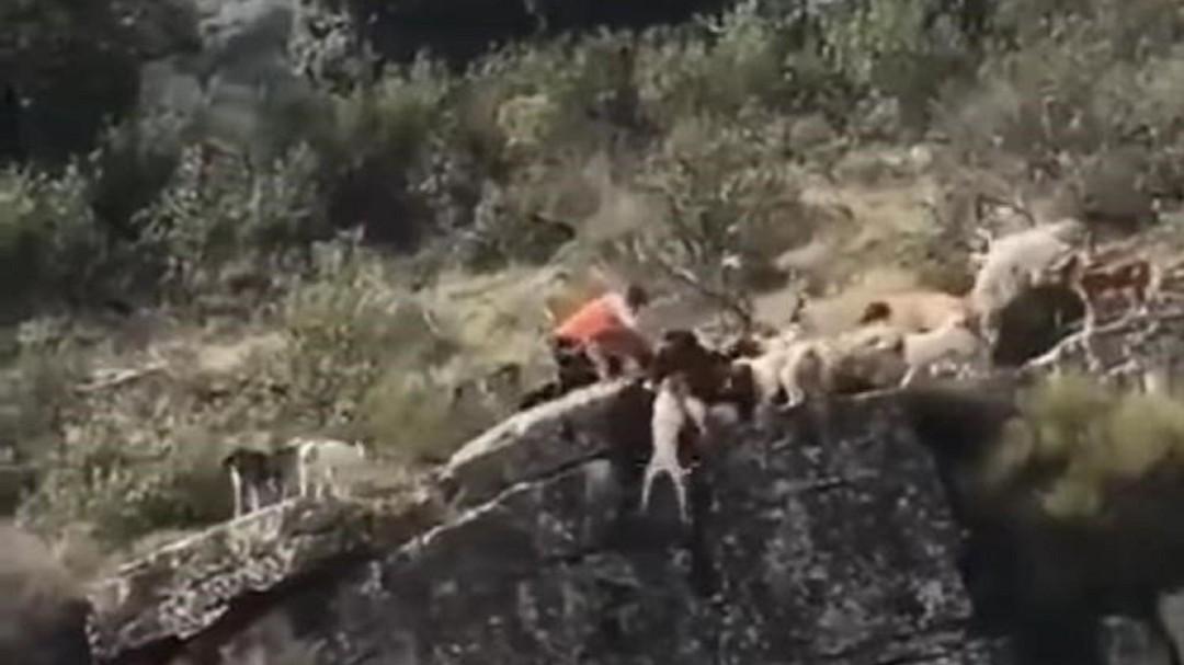 Indignación por un vídeo en el que 12 perros y un venado se despeñan por un barranco en una cacería