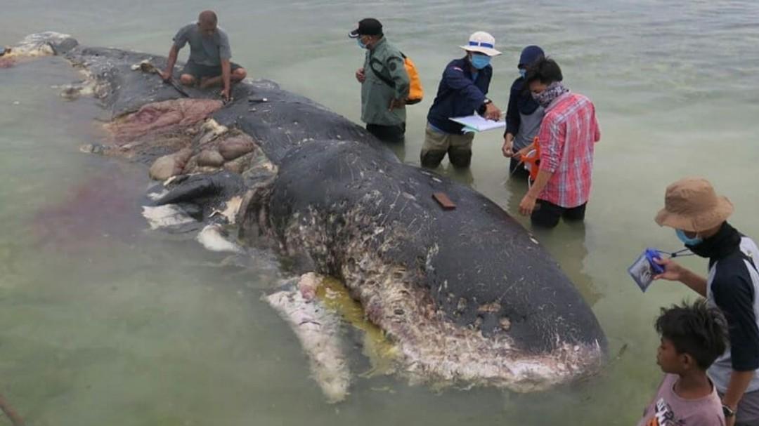 Encuentran una ballena muerta con 6 kilos de plástico en su estómago