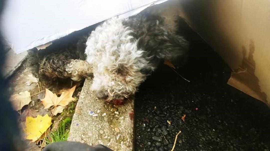 Investigan si han tirado a un perro a las vías desde una pasarela de Palencia